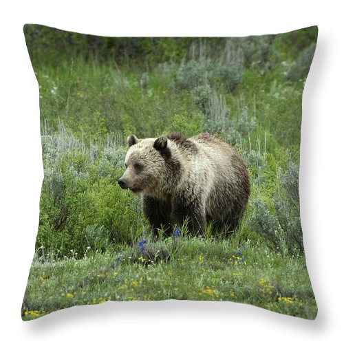 Grizzly Bear Throw Pillow featuring the photograph Searching For Berries by Sandra Bronstein