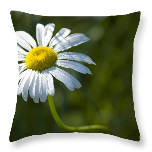 Daisy Throw Pillow featuring the photograph Searching For Sunlight by Idaho Scenic Images Linda Lantzy