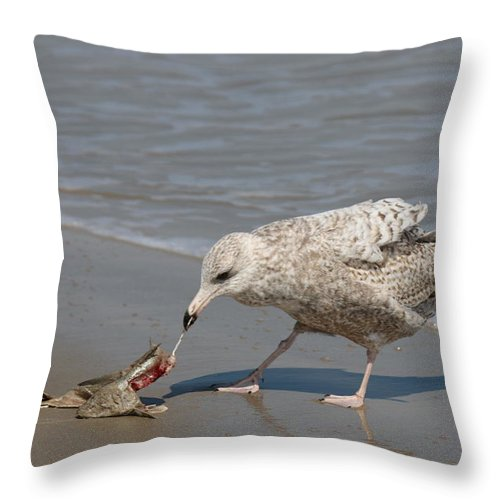 Sea Throw Pillow featuring the photograph Seaside Snack - 3 by Christy Pooschke