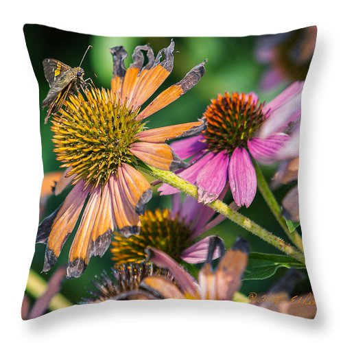 Flowers Throw Pillow featuring the photograph Season Ending by Edward Peterson