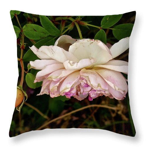 Botanical Throw Pillow featuring the photograph Seasoned Beauty by Bonnie See