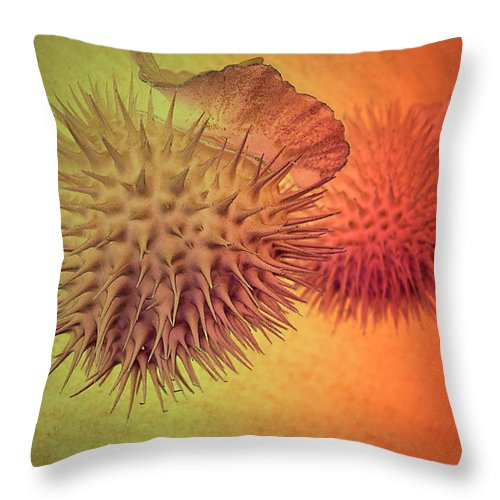 Seed Throw Pillow featuring the photograph Seasons Of Life - Beginning And Ending by Joyce Dickens