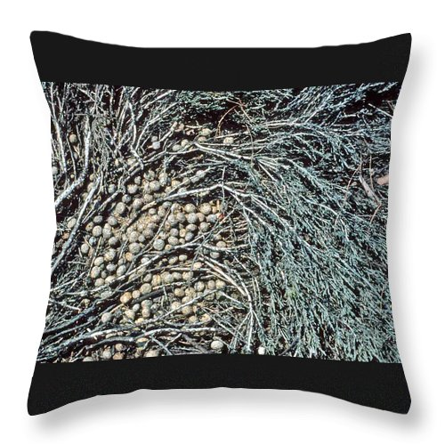 Seeds Throw Pillow featuring the photograph Seeds Of The Sea by Laurie Paci