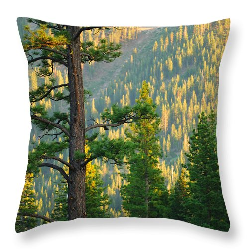 Forest Throw Pillow featuring the photograph Seeing The Forest Through The Tree by Jill Reger