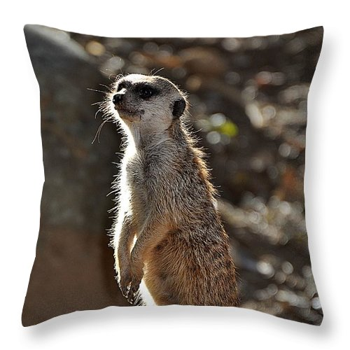 Animals Throw Pillow featuring the photograph Sentry by Jan Amiss Photography