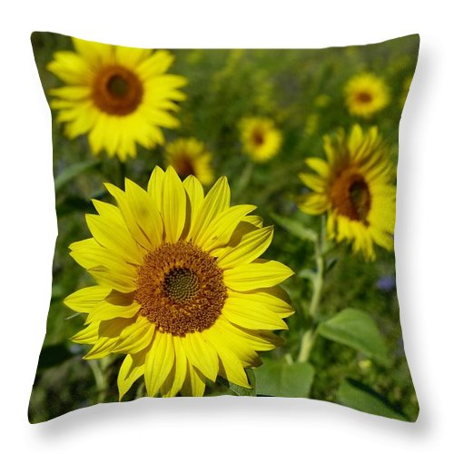 Sunflower Throw Pillow featuring the photograph September Sunshine by David Curtis
