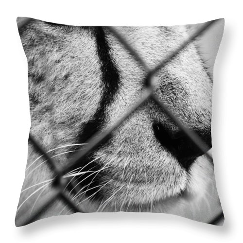 Animals Throw Pillow featuring the photograph Set Me Free by The Artist Project