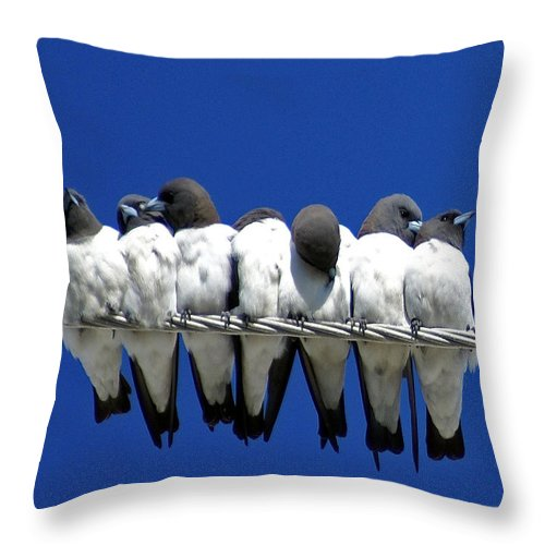 Animals Throw Pillow featuring the photograph Seven Swallows Sitting by Holly Kempe