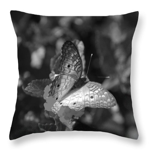 Black And White Throw Pillow featuring the photograph Shades Of Flight by Rob Hans