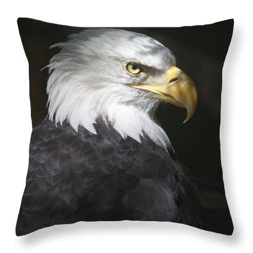 Eagle Bird Shadow Portrait Hawk Throw Pillow featuring the photograph Shadow Raptor by Winston Rockwell