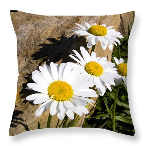 Ox-eye Daisy Throw Pillow featuring the photograph Shadows On The Rock by Thomas R Fletcher