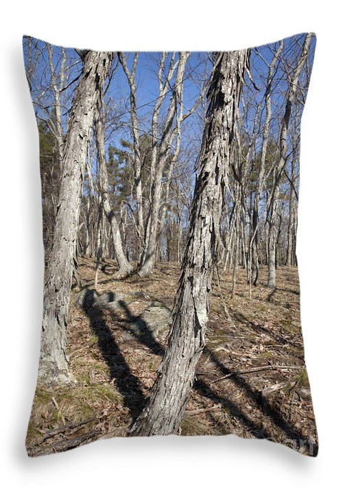Forest Throw Pillow featuring the photograph Shagbark Hickory Forest by Erin Paul Donovan