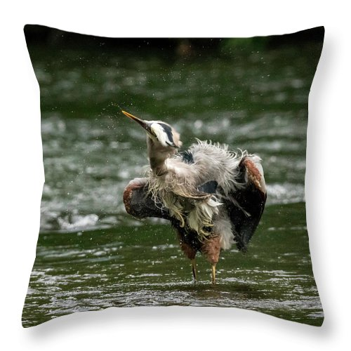 Bird Throw Pillow featuring the photograph Shake It Off by Travis Boyd