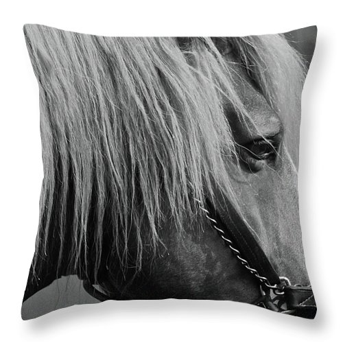 Horse Throw Pillow featuring the photograph Shaker by Donna Shahan