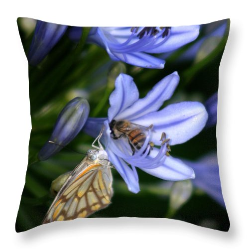 Butterfly Throw Pillow featuring the photograph Sharing The Good Stuff by Joseph G Holland