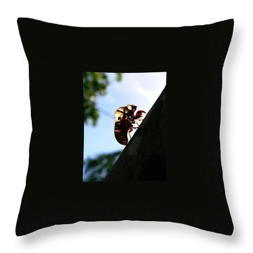 Insect Throw Pillow featuring the photograph Shed My Skin by Angela Wright