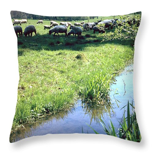 Sheep Throw Pillow featuring the photograph Sheep by Flavia Westerwelle
