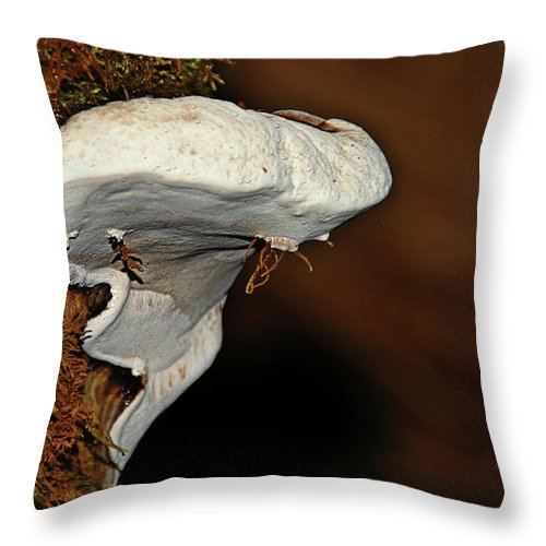 Fungus Throw Pillow featuring the photograph Shelf Fungus On Bark - Quinault Temperate Rain Forest - Olympic Peninsula Wa by Christine Till
