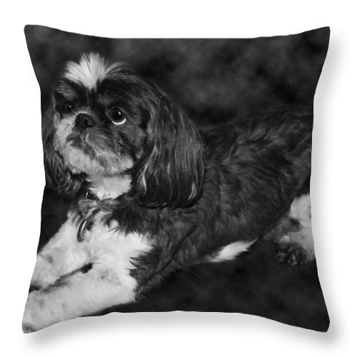 3scape Throw Pillow featuring the painting Shih Tzu by Adam Romanowicz