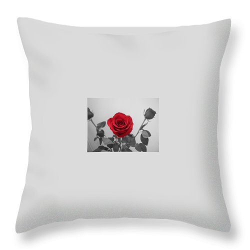 Roses Photography Throw Pillow featuring the photograph Shining Red Rose by Georgeta Blanaru