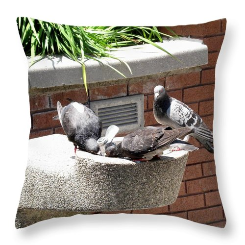 Pigeons Throw Pillow featuring the photograph Shooo by Ian MacDonald