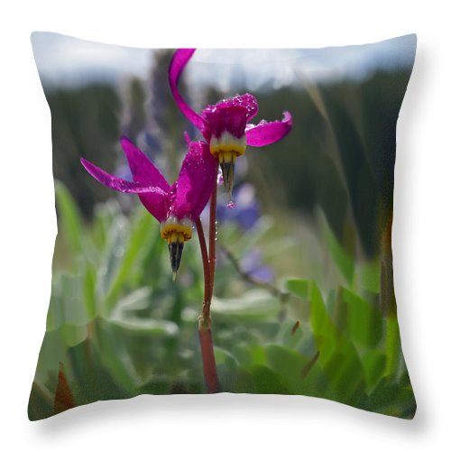 Wild Flower Throw Pillow featuring the photograph Shooting Star by Heather Coen