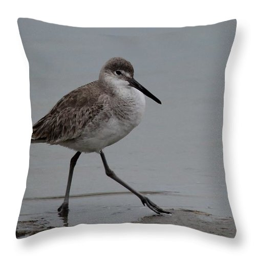 Shore Throw Pillow featuring the photograph Shore Bird by Christy Pooschke