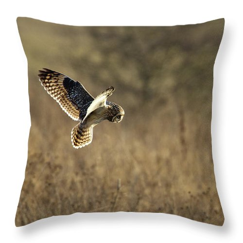 Birds Throw Pillow featuring the photograph Short-eared Owl About To Strike by Bob Kemp