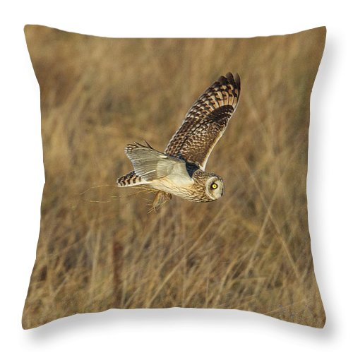 Birds Throw Pillow featuring the photograph Short-eared Owl With Vole by Bob Kemp