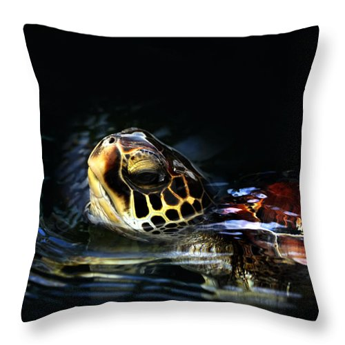Green Throw Pillow featuring the photograph Short Visit Turtle by Marilyn Hunt