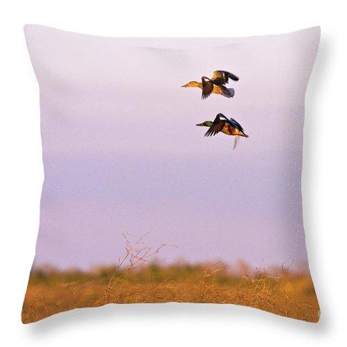 Ducks Throw Pillow featuring the photograph Shoveler Pair by Scott Pellegrin