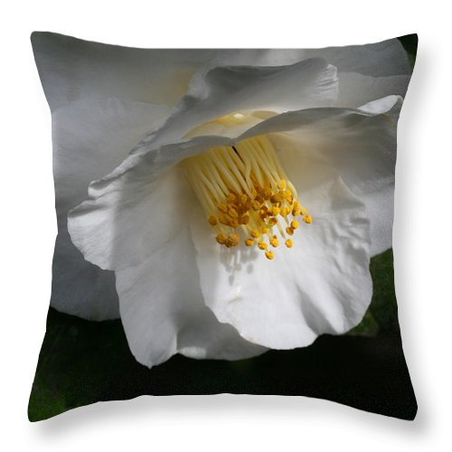 Shower Throw Pillow featuring the photograph Showered With Love by Tammy Pool