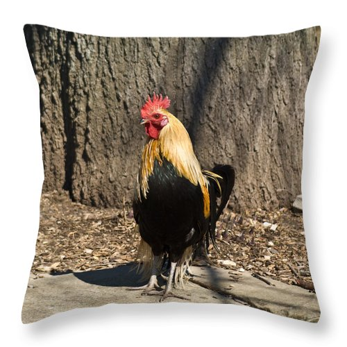Rooster Throw Pillow featuring the photograph Showy Rooster posed by Douglas Barnett