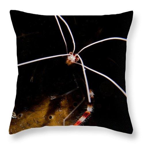 Shrimp Throw Pillow featuring the photograph Shrimp Face by Brent Barnes