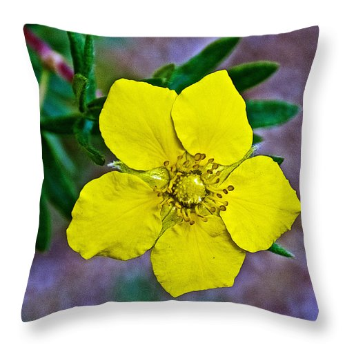 Shrubby Cinquefoil On Iron Creek Trail In Sawtooth National Wilderness Area-idaho From Iron Creek Trail In Sawtooth National Wilderness Area Throw Pillow featuring the photograph Shrubby Cinquefoil On Iron Creek Trail In Sawtooth National Wilderness Area-idaho by Ruth Hager