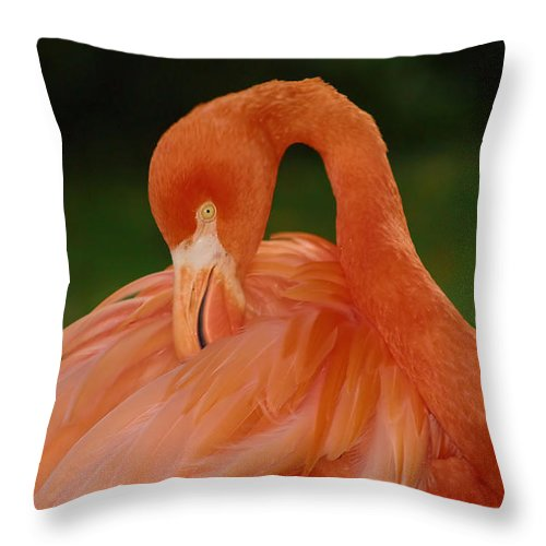 Flamingo Throw Pillow featuring the photograph shy by Gaby Swanson