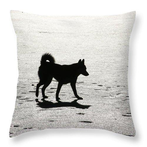 Landscape Throw Pillow featuring the photograph Siberian Husky 6 by David Dunham