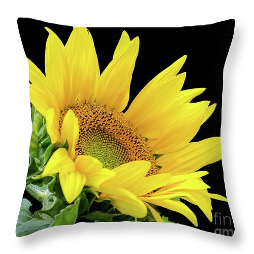 Flowers Throw Pillow featuring the photograph Side Glance by Centre Art Gallery By Christine Montenegro
