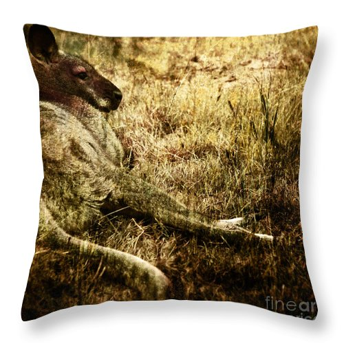 Cangaroo Throw Pillow featuring the photograph Siesta by Angel Ciesniarska