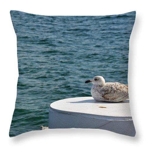 Beach Throw Pillow featuring the photograph Siesta by Erik Barth