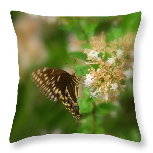 Sign Of Spring Throw Pillow featuring the photograph Sign Of Spring by Susanne Van Hulst
