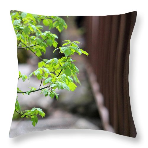 Boxelder Leaves Throw Pillow featuring the photograph Signs Of Spring In American Fork Canyon Utah by Colleen Cornelius