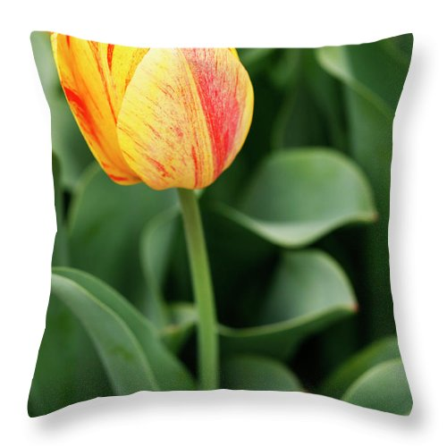 Tulip Throw Pillow featuring the photograph Signs Of Spring by Marilyn Hunt