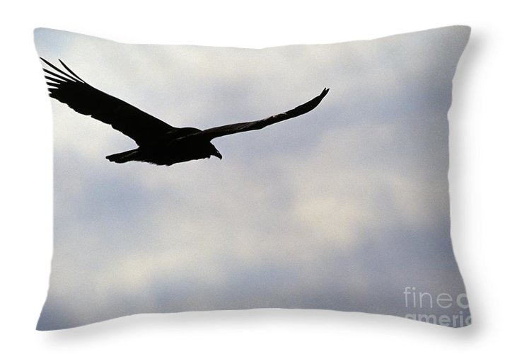 Silhouette Throw Pillow featuring the photograph Silhouette Of A Turkey Vulture by Erin Paul Donovan