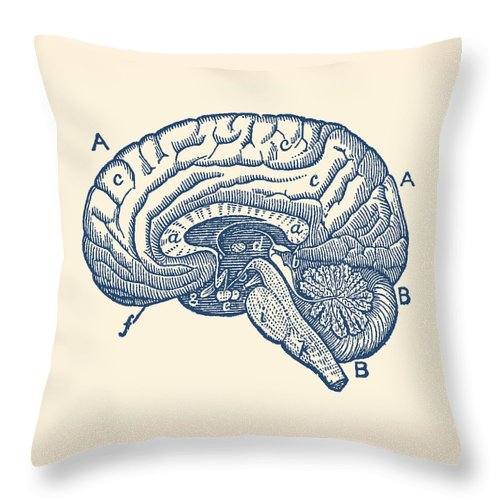 Simple Brain Diagram - Anatomy Poster Throw Pillow