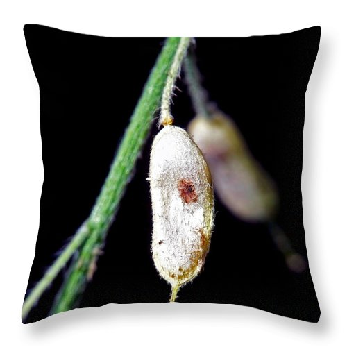 Abstract Throw Pillow featuring the photograph Simplicity II by Lauren Radke
