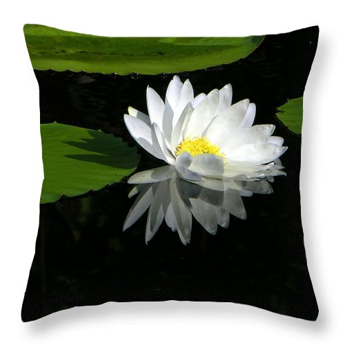 Water Lily Throw Pillow featuring the photograph Simply White on Black by John Lautermilch