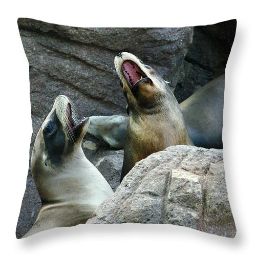 Sea Lions Throw Pillow featuring the photograph Singing Sea Lions by Anthony Jones