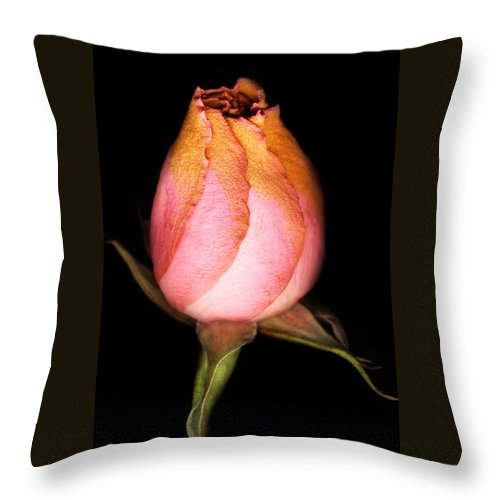 Rose Throw Pillow featuring the photograph single Rose by Marilyn Hunt