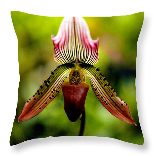 Orchid Throw Pillow featuring the photograph Singular Beauty by Marilyn Hunt